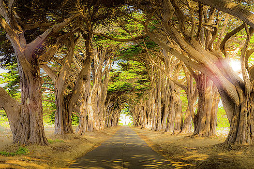 Through the Trees by Peter Irwindale