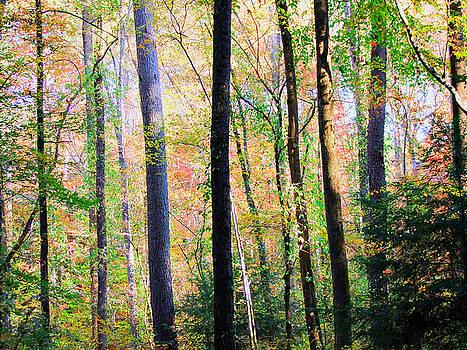 Through The Trees by Rick Davis
