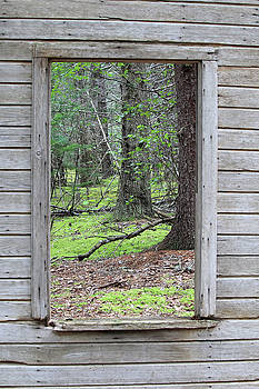 Through the Window by Kimberly VanNostrand
