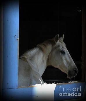 Through the Window by Rabiah Seminole
