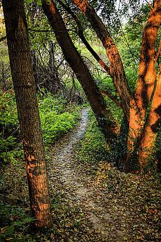 Through the Woods by Scott Bean