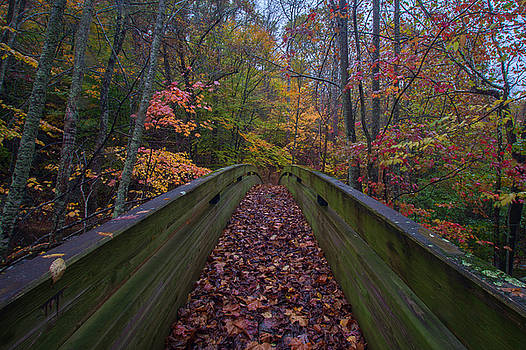 Through the Woods by Steve Hammer