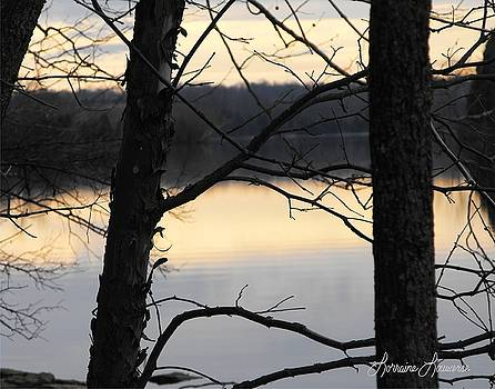 Thru the Trees by Lorraine Louwerse