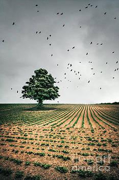 Thunder Arising by Evelina Kremsdorf