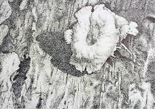 Thw White Mushroom 3 by Saadon Bin Saad