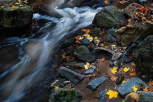 Dana Sohr - Tiber Creek - Ellicott City