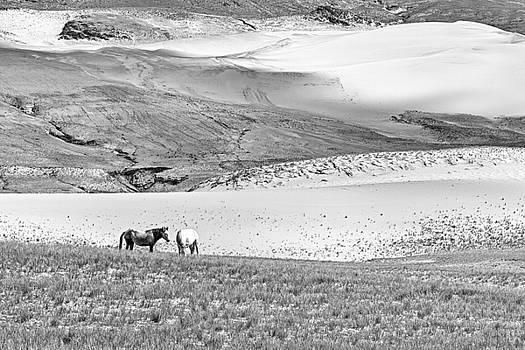 Tibetan ponies in desert by Hitendra SINKAR