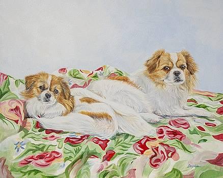Tibetan Spaniel by Gail Dolphin
