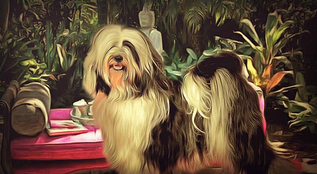 Tibetan Terrier  by Janice MacLellan