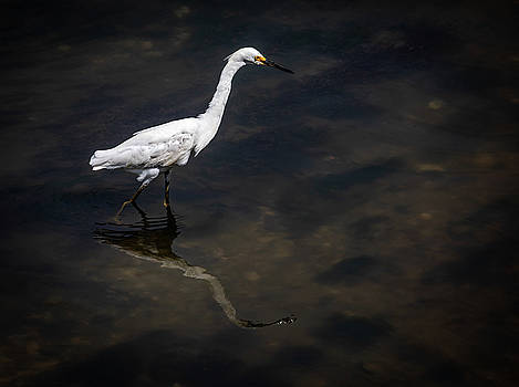 Tidal Creek Egret Charleston Lowcountry by Donnie Whitaker