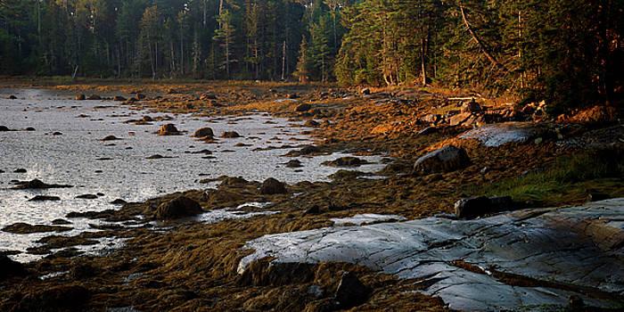 Tidal Flats by Bill Morgenstern