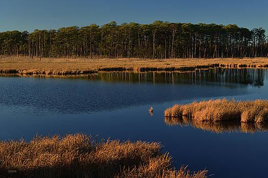 Dana Sohr - Tidal Marsh - Maryland Eastern Shore