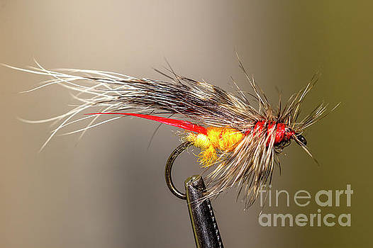 Tied Fly by Shawn Jeffries