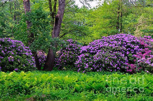 Tiergarten in Spring by Sandy Faulks