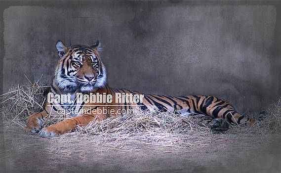 Tiger 9386 by Captain Debbie Ritter