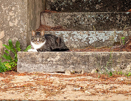 Tiger Cat on Stairs by Donna Doherty