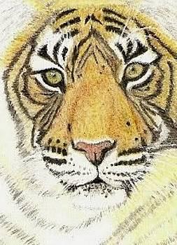 Tiger by Christine  Bennett