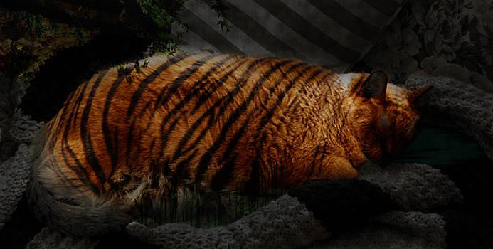 Kathi Shotwell - Tiger Dreams