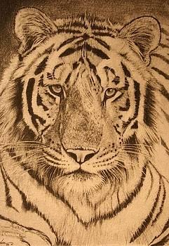 Tiger Eyes by Susie Gordon