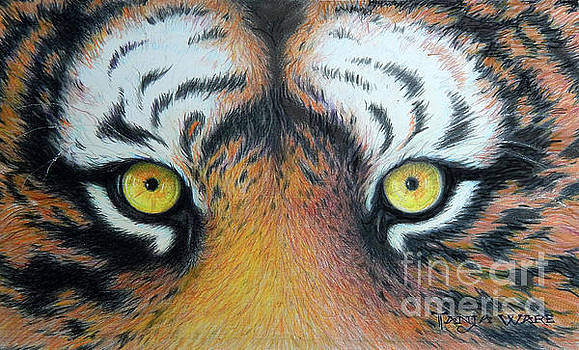 Tiger Eyes by Tanja Ware