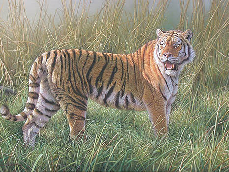 Tiger in long grass by Eric Wilson