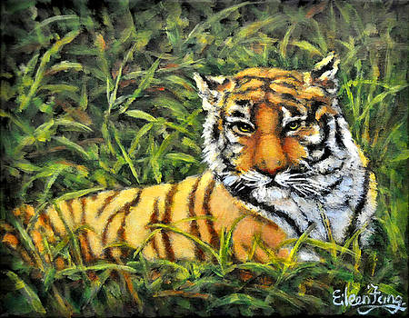 Tiger in Meadow by Eileen  Fong
