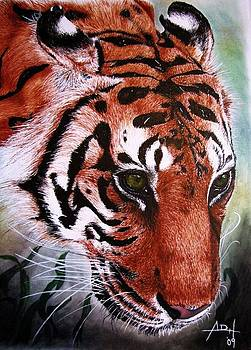 Tiger in the Mists  by Angela Hannah