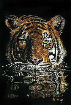 Tiger in Water by William Underwood