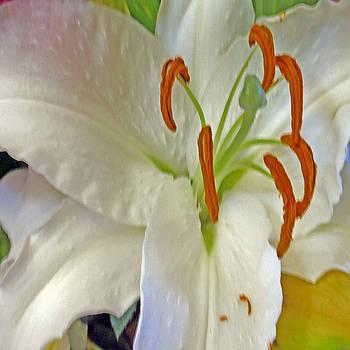 Tiger Lily creative by Gene Garrison