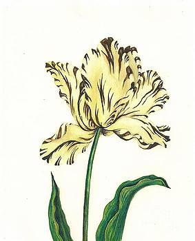 Striped Tulip by Margaryta Yermolayeva