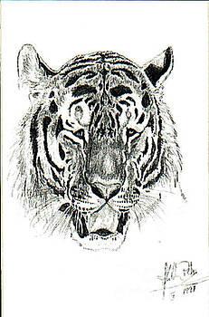 Tiger Look by Peter Kulik