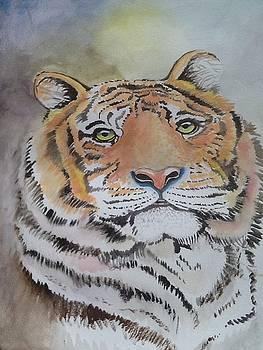 Tiger by Lynsey Loughrey