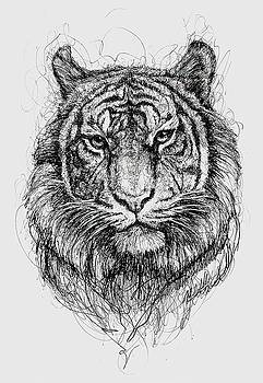 Tiger by Michael Volpicelli