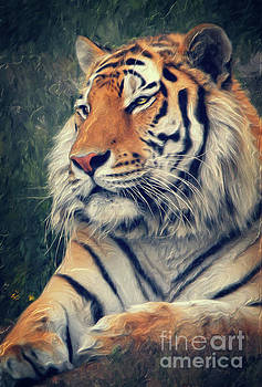 Tiger No 3 by Angela Doelling AD DESIGN Photo and PhotoArt