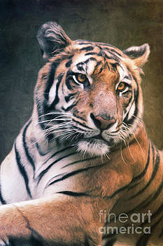 Tiger No 6 by Angela Doelling AD DESIGN Photo and PhotoArt