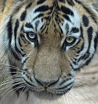 Tiger OP by Ronda Ryan
