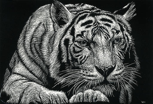 Tiger Pause by William Underwood