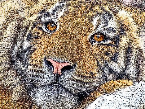 Tiger Portrait - Color Sketch by Ericamaxine Price