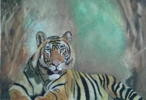 Tiger by Rajendra Parekh