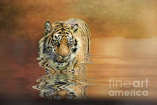 Tiger Reflections by Brian Tarr