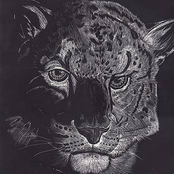 Tiger Scratch Board by Darren Cannell