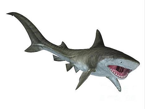 Corey Ford - Tiger Shark Jaws