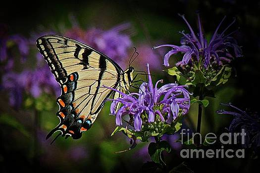 Tiger swallowtail butterfly 2 by Jim Wright