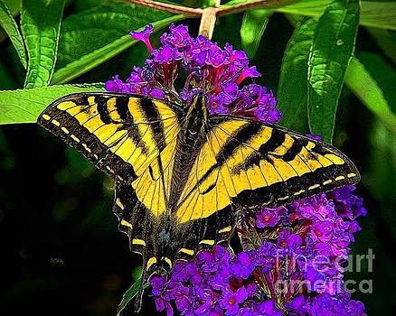 Tiger Swallowtail Butterfly by Patrick Witz