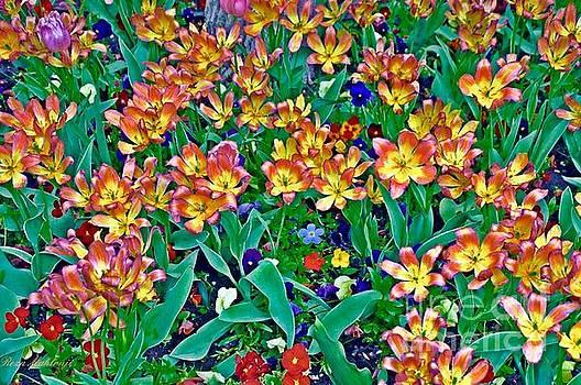 Tiger tulip  by R Mahlouji