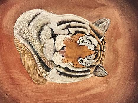 Tiger by Unknown