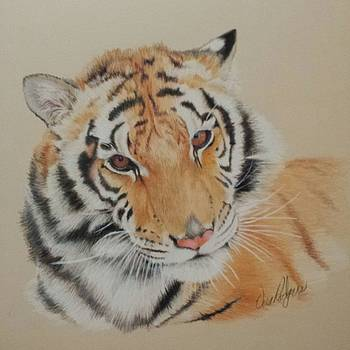 Tiger by Vera Rodgers