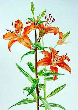 Tigerlilies by Melanie Hunter