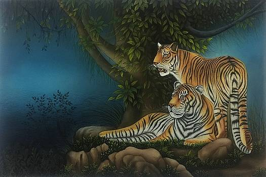 Tigers  by Ankit