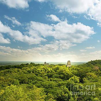 Tim Hester - Tikal Guatemala Mayan Ruins